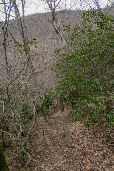 Thompson Creek Trail -- 4,450'