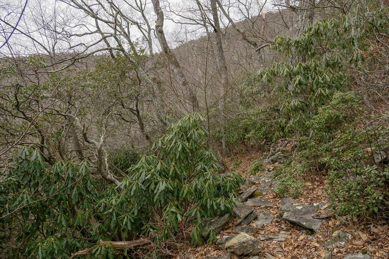 Thompson Creek Trail -- 4,750'