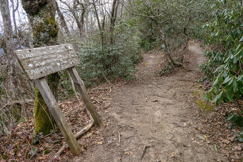 Mountains-to-Sea/Laurel Mountain Trail Junction -- 4,960'