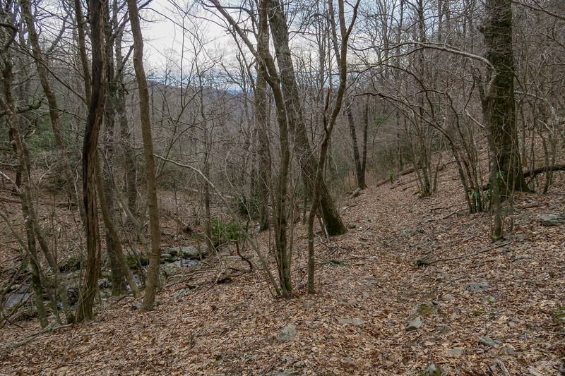 Thompson Creek Trail -- 4,100'
