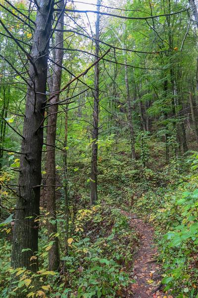 Art Loeb Trail -- 4,200'