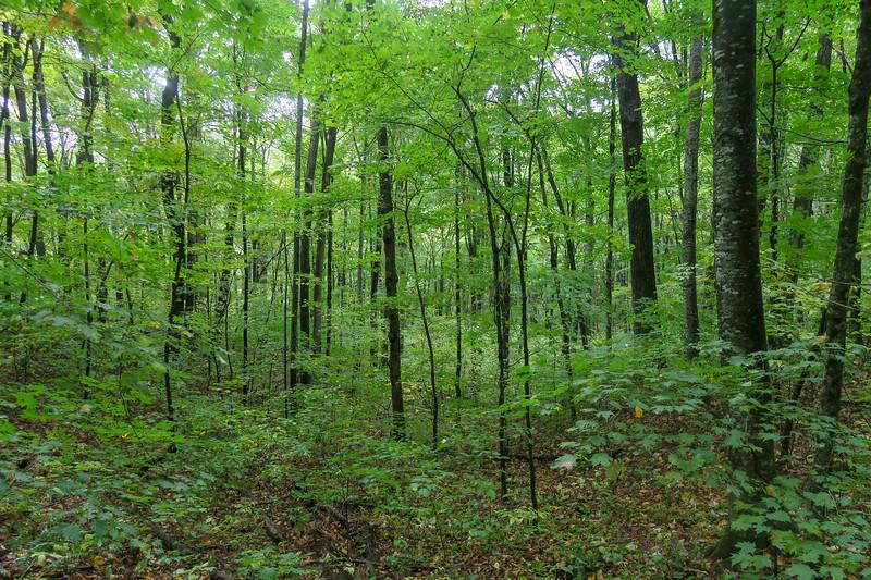 Art Loeb Trail -- 4,020'