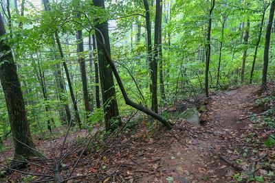 Art Loeb Trail -- 3,550'