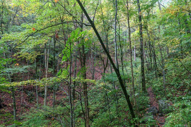 Art Loeb Trail -- 4,430'