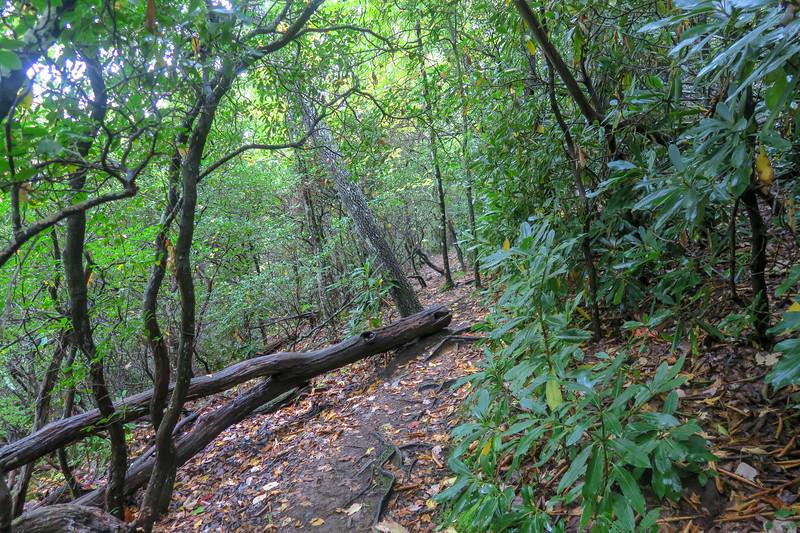 Art Loeb Trail -- 4,150'