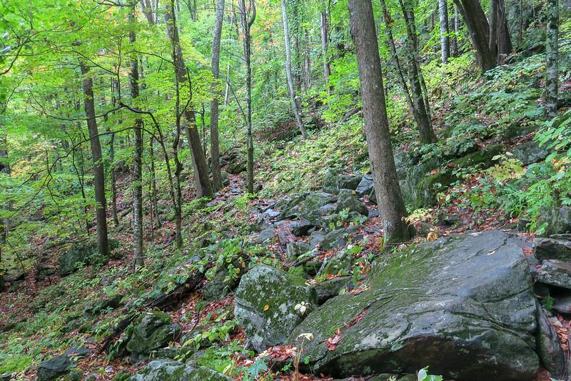 Art Loeb Trail -- 4,520'
