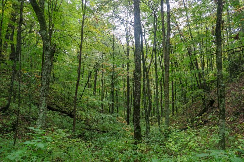 Art Loeb Trail -- 4,420'