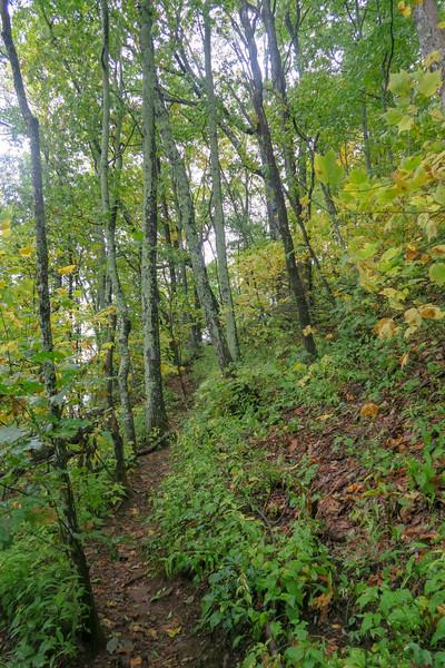 Art Loeb Trail -- 4,720'