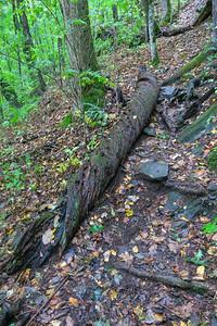 Art Loeb Trail -- 3,980'