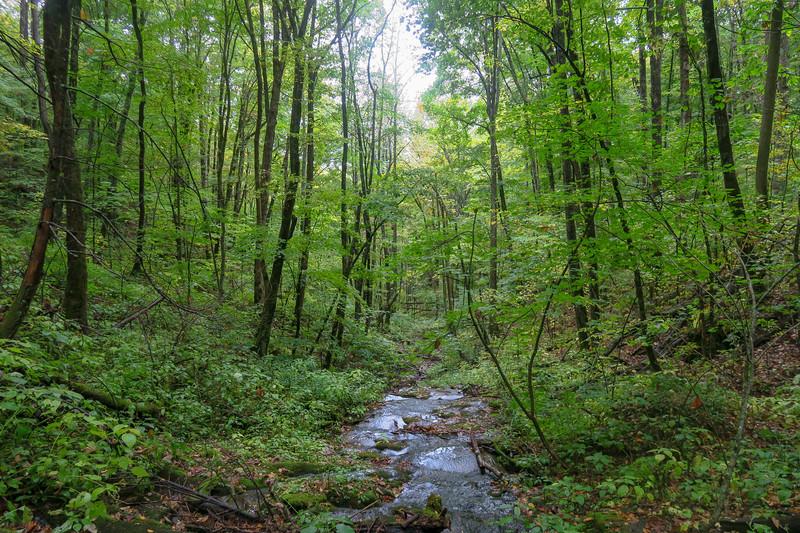 Art Loeb Trail -- 4,080'