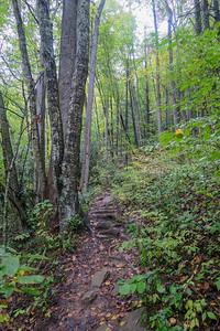Art Loeb Trail -- 3,290'