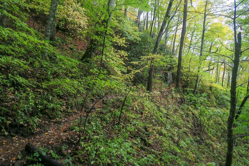 Art Loeb Trail -- 4,500'