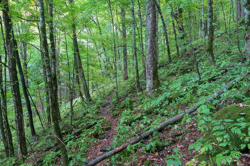 Art Loeb Trail -- 4,400'