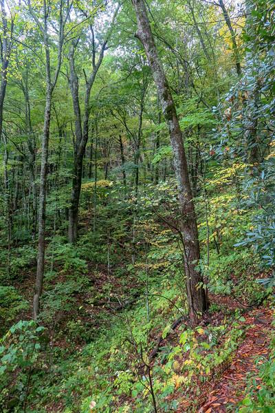 Art Loeb Trail -- 4,460'