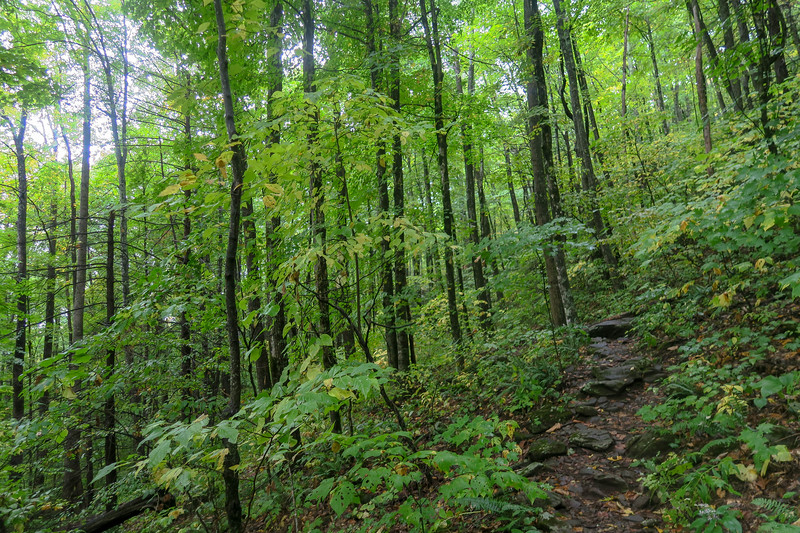 Art Loeb Trail -- 4,100'