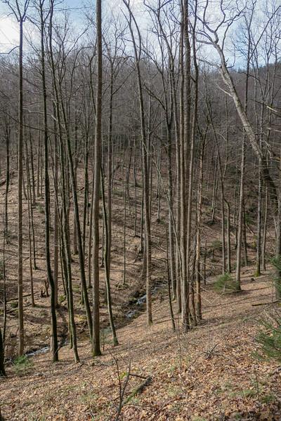 Avery Creek Trail -- 2,950'