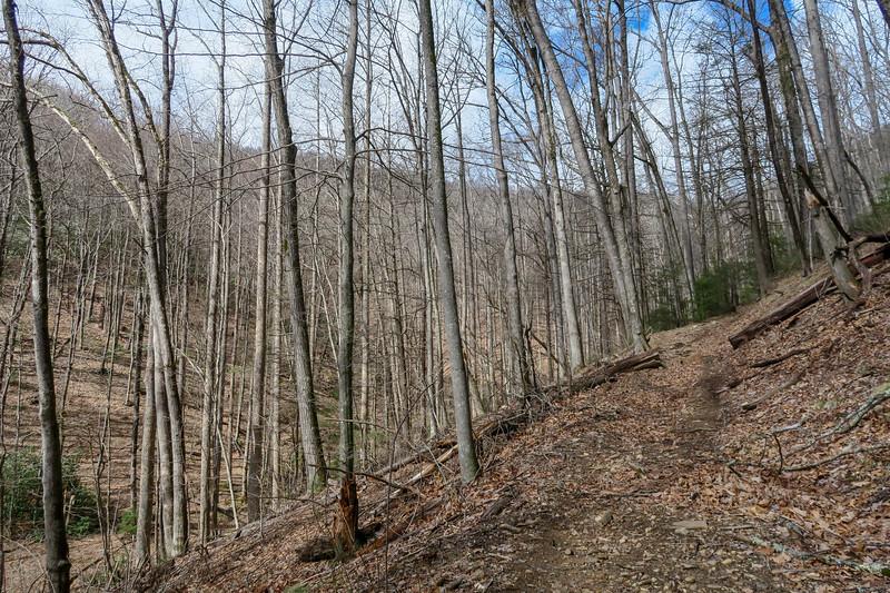 Avery Creek Trail -- 2,900'