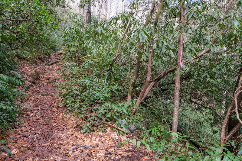 Avery Creek Trail -- 2,740'