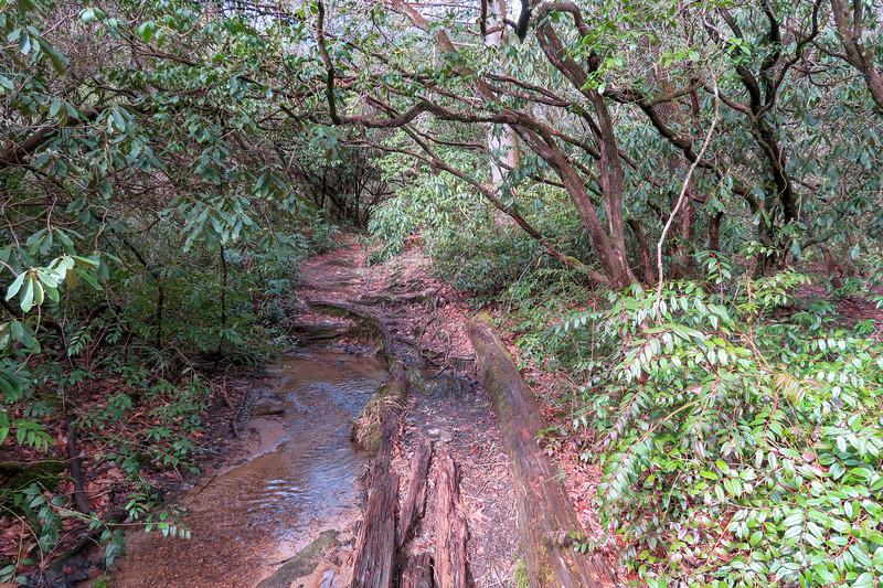 Avery Creek Trail -- 2,590'