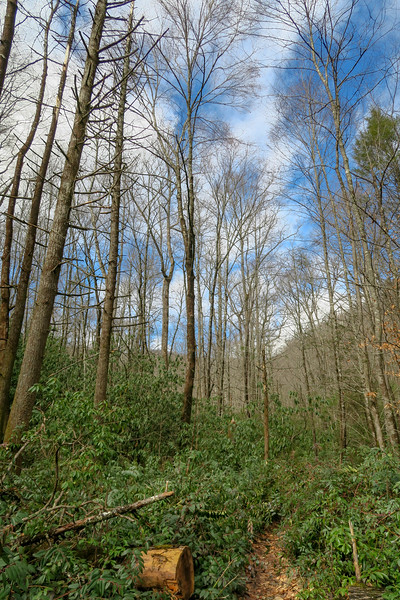 Avery Creek Trail -- 2,600'
