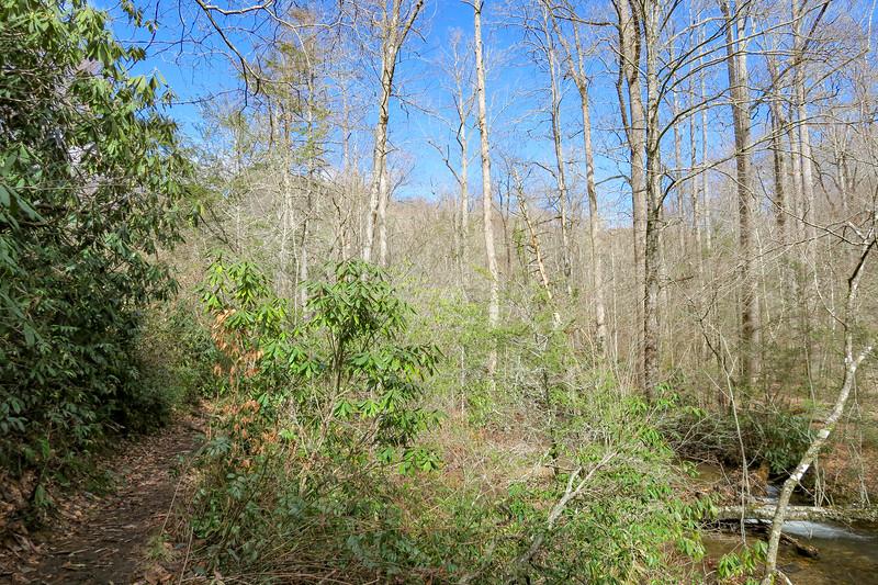 Avery Creek/Buckhorn Gap Trail -- 2,570'