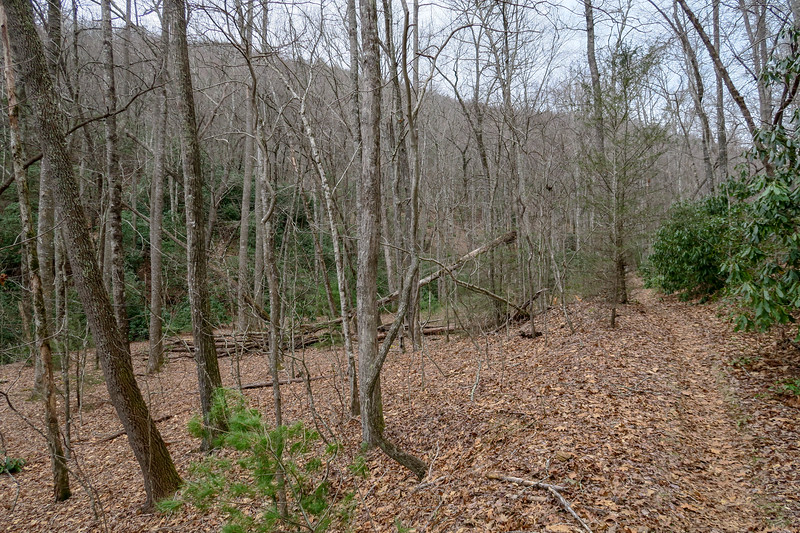 Bad Fork Trail -- 2,670'