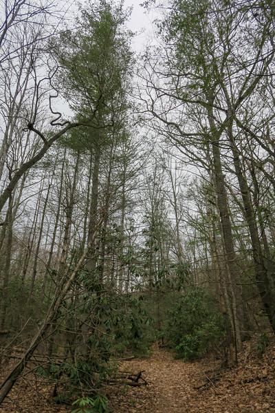 Bad Fork Trail -- 2,640'