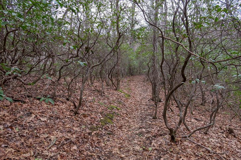 Bad Fork Trail -- 2,980'