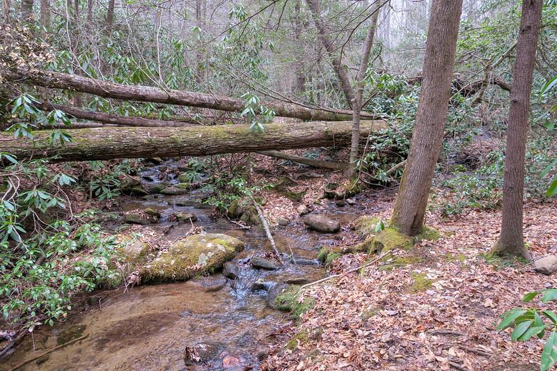 Bad Fork Trail -- 2,610'