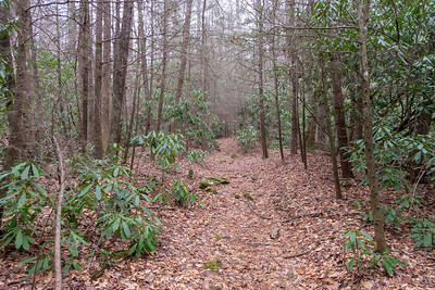 Bad Fork Trail -- 2,600'