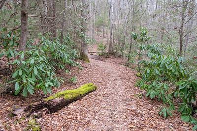 Bad Fork Trail -- 2,540'