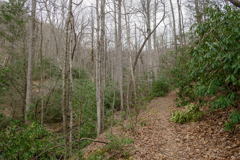 Bad Fork Trail -- 2,750'