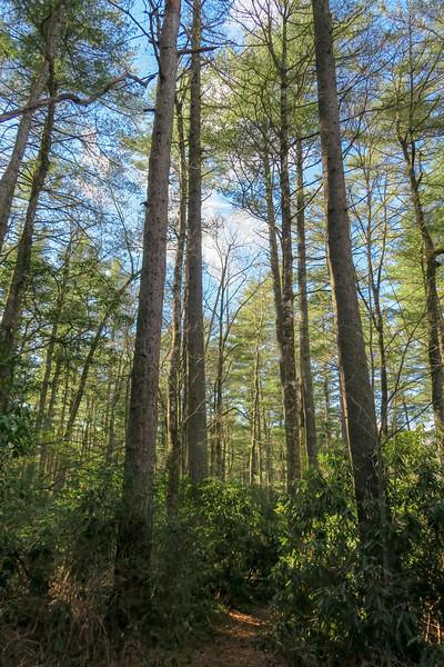 Barnett Branch Trail -- 3,280'
