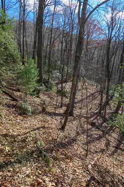 Barnett Branch Trail -- 3,460'