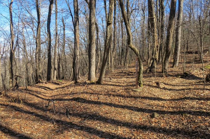 Barnett Branch/Black Mountain Trail Junction -- 3,900'