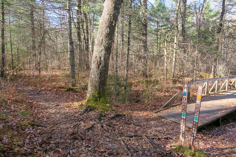 Barnett Branch/Pink Beds Loop Trail Southwest Trail Junction -- 3,180'