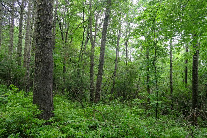 Barnett Branch Trail -- 3,250'