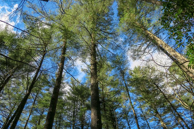 Barnett Branch Trail -- 3,300'