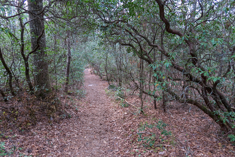 Barnett Branch Trail -- 3,220'