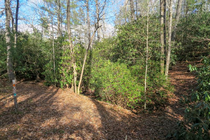Barnett Branch/Pink Beds Loop Trail Southeast Trail Junction -- 3,200'