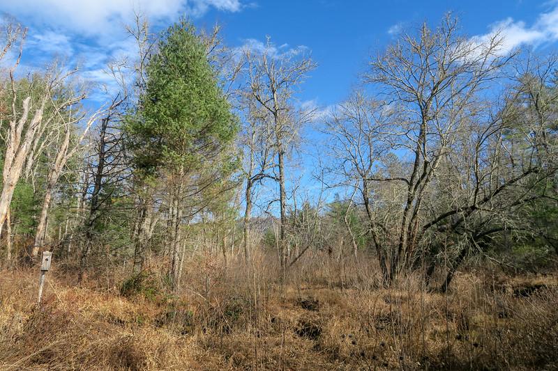 Barnett Branch Trail -- 3,180'