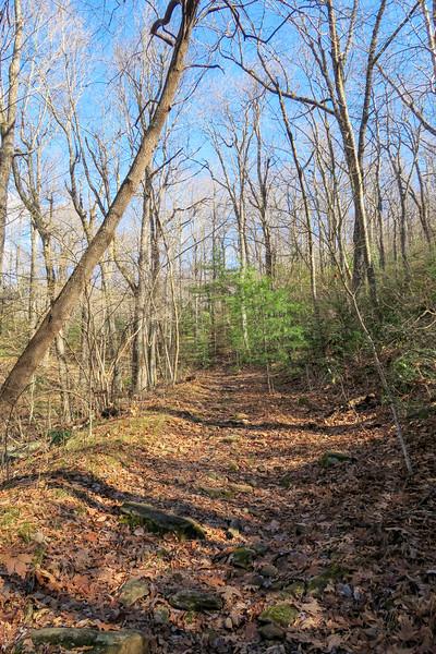 Barnett Branch Trail -- 3,800'