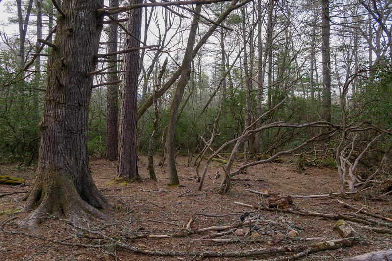 Barnett Branch Trail -- 3,210'