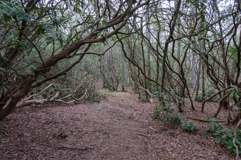 Barnett Branch Trail -- 3,200'