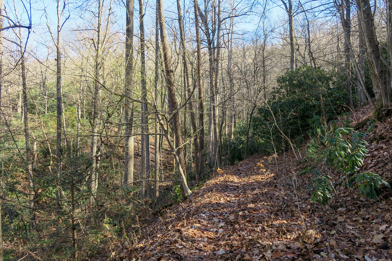 Barnett Branch Trail -- 3,660'