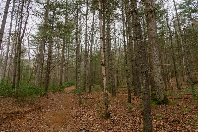 Bear Branch Trail -- 2,650'
