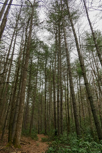 Bear Branch Trail -- 2,560'