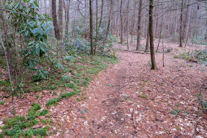 Bear Branch Trail -- 2,550'