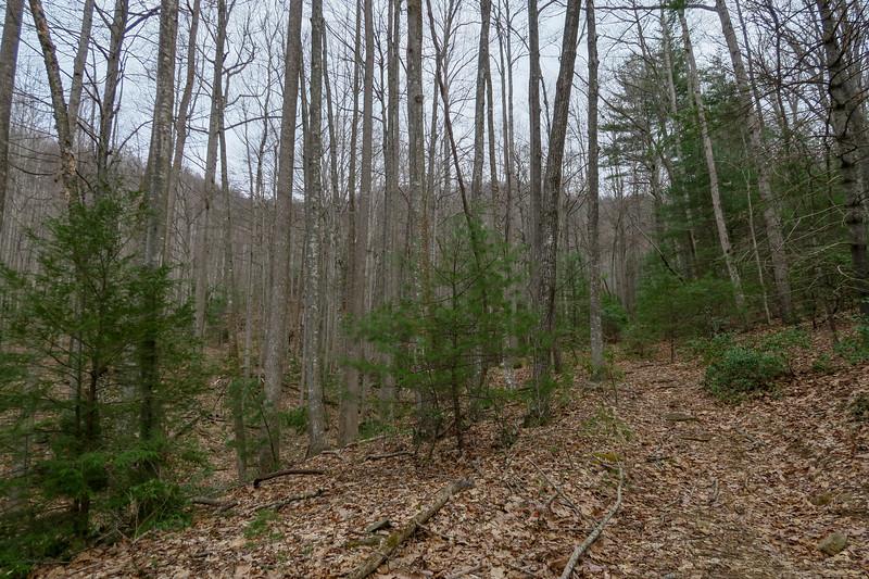 Bear Branch Trail -- 2,740'