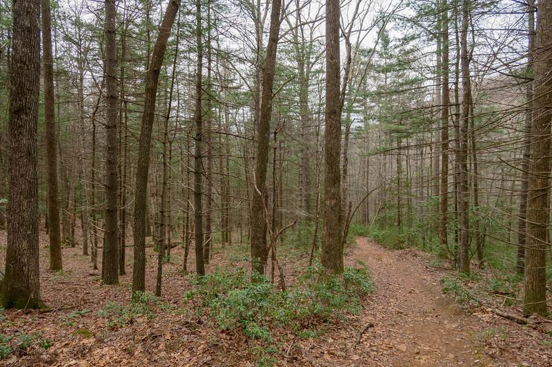 Bear Branch Trail -- 2,720'